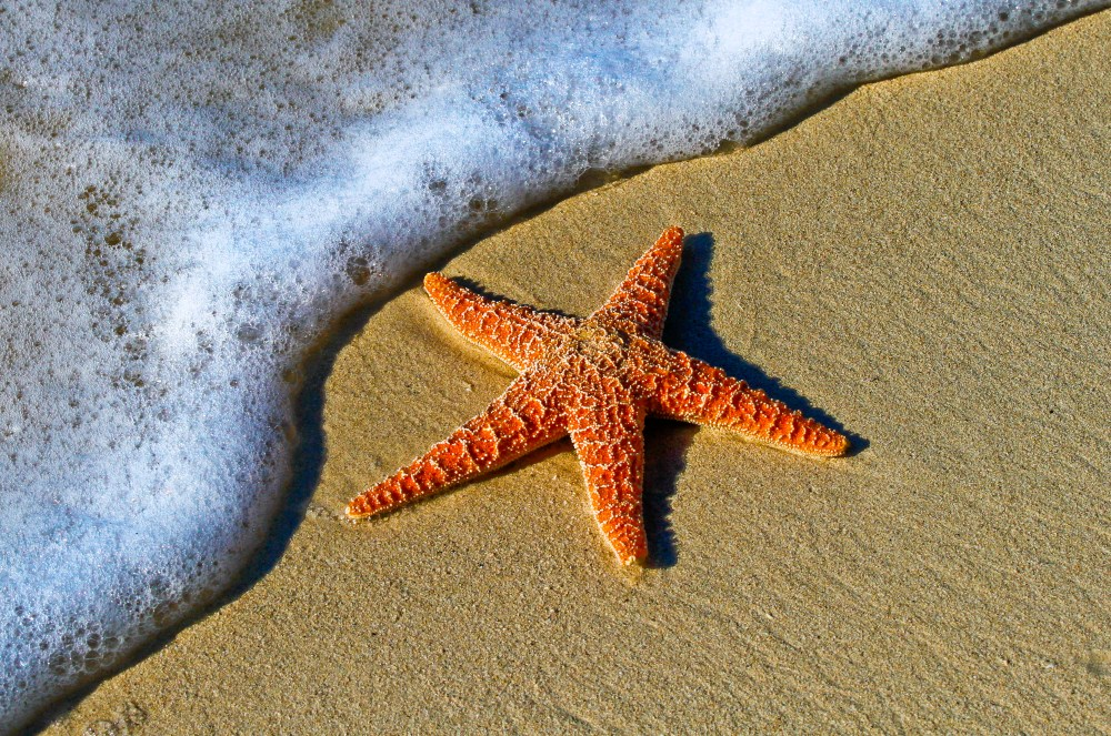 500 starfish pictures download