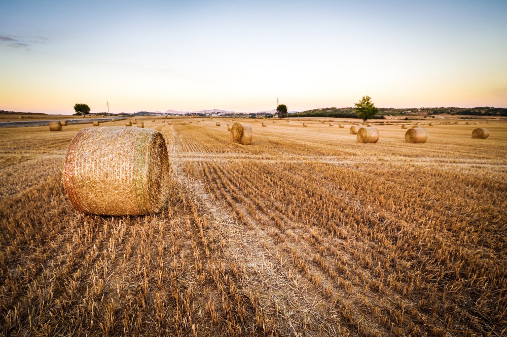 hay bale pictures download