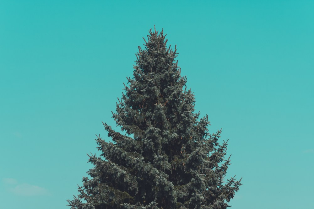 Free Fall Wallpaper For Laptop Pine Tree Pictures Download Free Images Amp Stock Photos