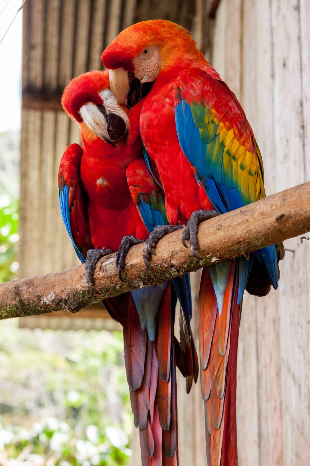 500 parrot pictures download