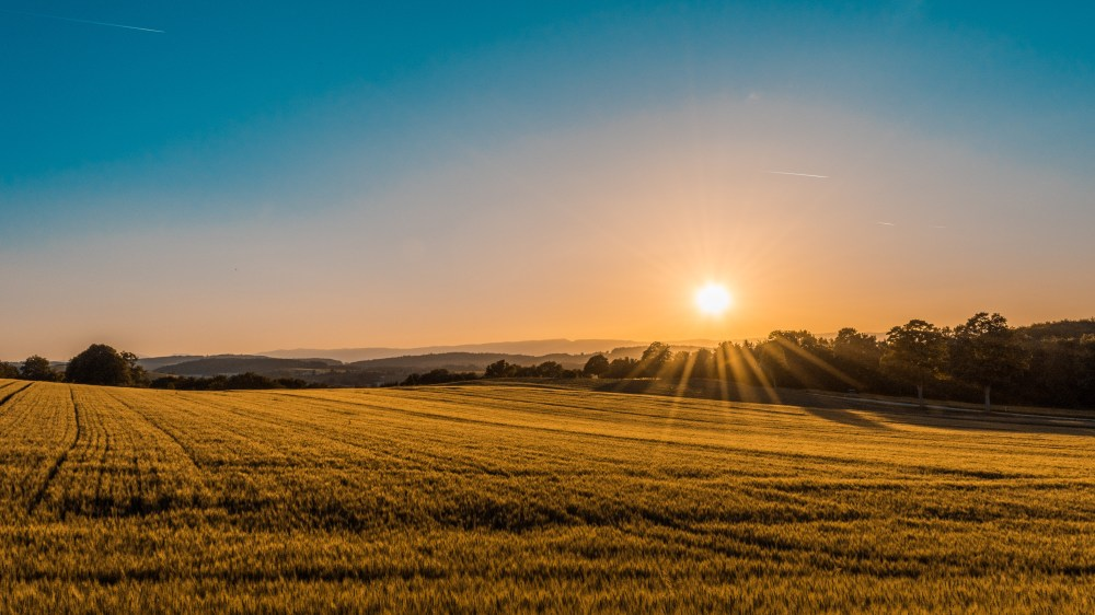 field sunrise landscape and
