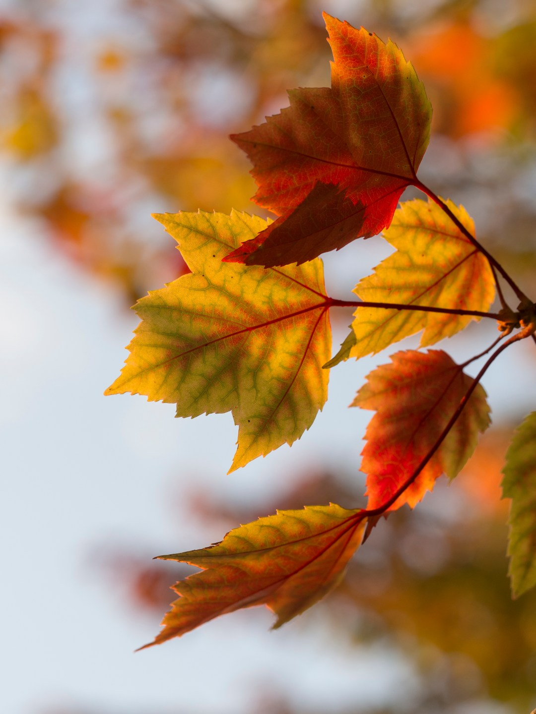 Fall Season Wallpapers Hd Leaves Leaf Fall And Autumn Hd Photo By Aaron Burden