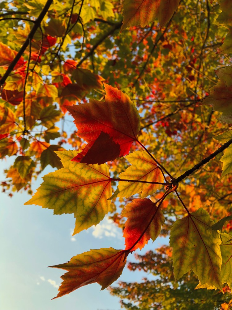 Free Fall Wallpaper Images Leaf Autumn Wallpaper And Fall Wallpapers Hd Photo By