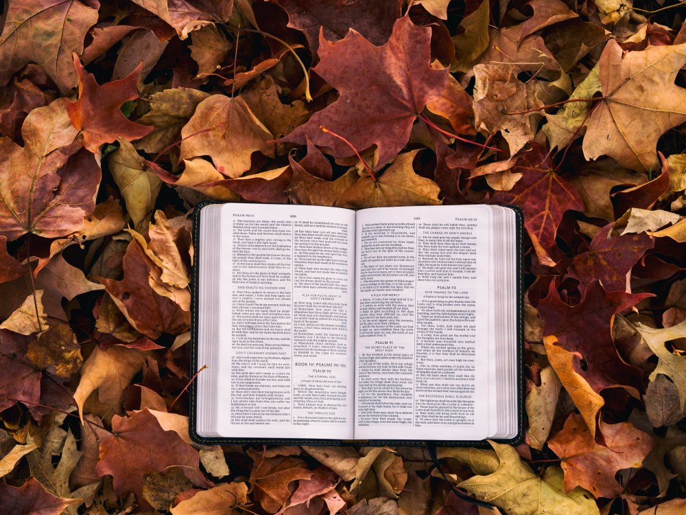 leaf bible book and