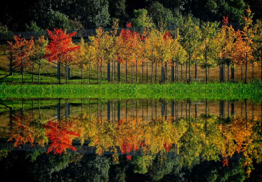 Free Fall Photos Wallpaper Autumn Reflections Hd Photo By Ricardo Gomez Angel