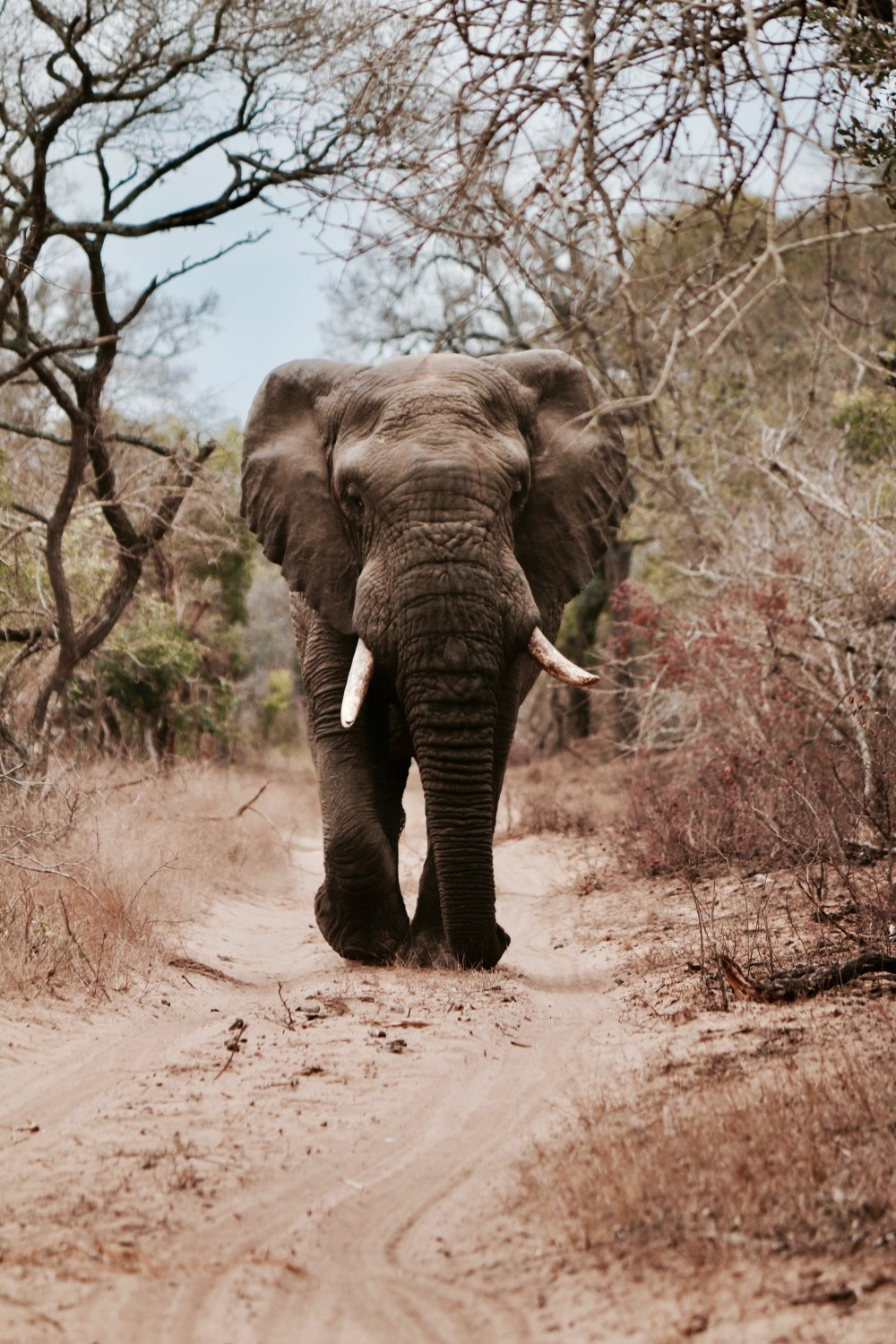 elephant pictures hd download