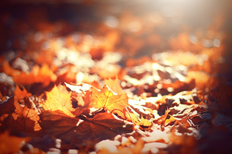 Baby Love Quotes Wallpapers Autumn Fall Leaves And Person Hd Photo By Cecile Vedemil