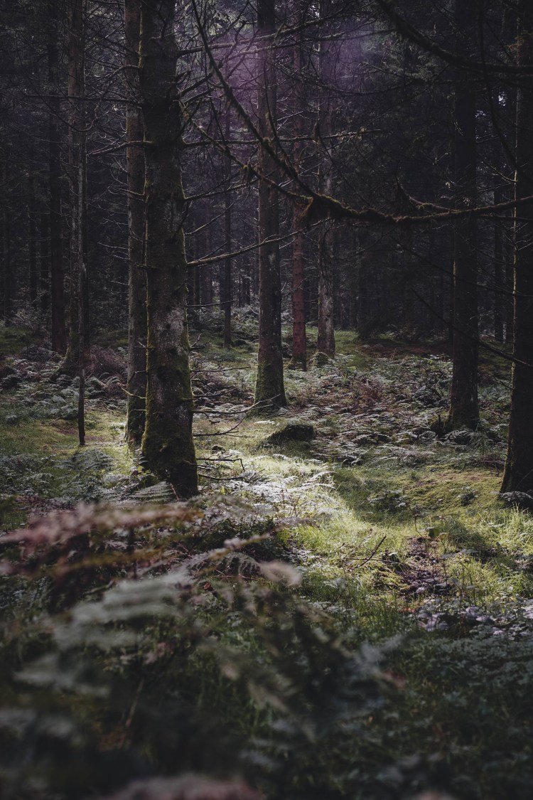 Forest Nature Tree And Outdoors Hd Photo By Dan Stark