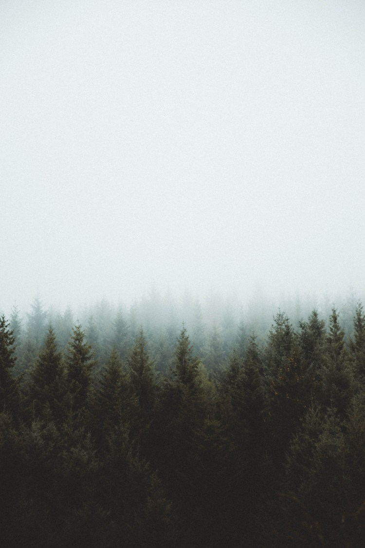 Fall Aesthetic Wallpaper Misty Shroud Over A Forest Photo By Jay Mantri Jaymantri