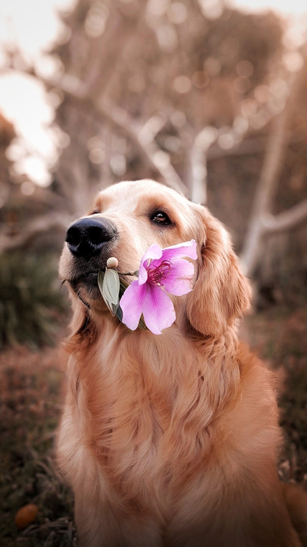 Cute Cute Hd Wallpapers Dog Holding Flower Photo Free Dog Image On Unsplash