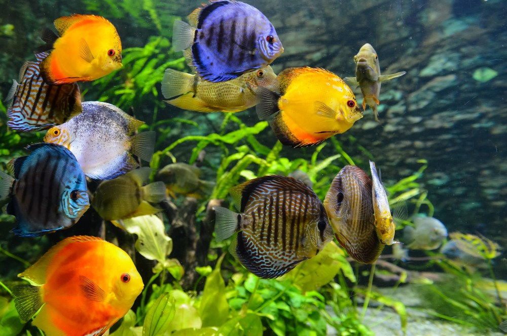 aquarium pictures hd download