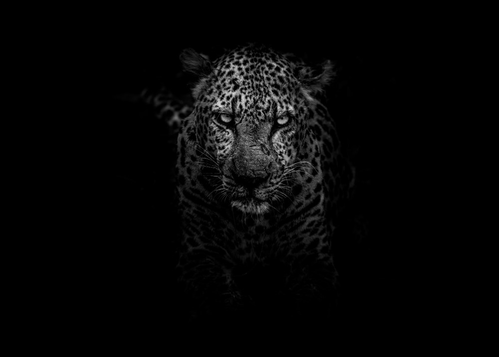 100 leopard pictures download