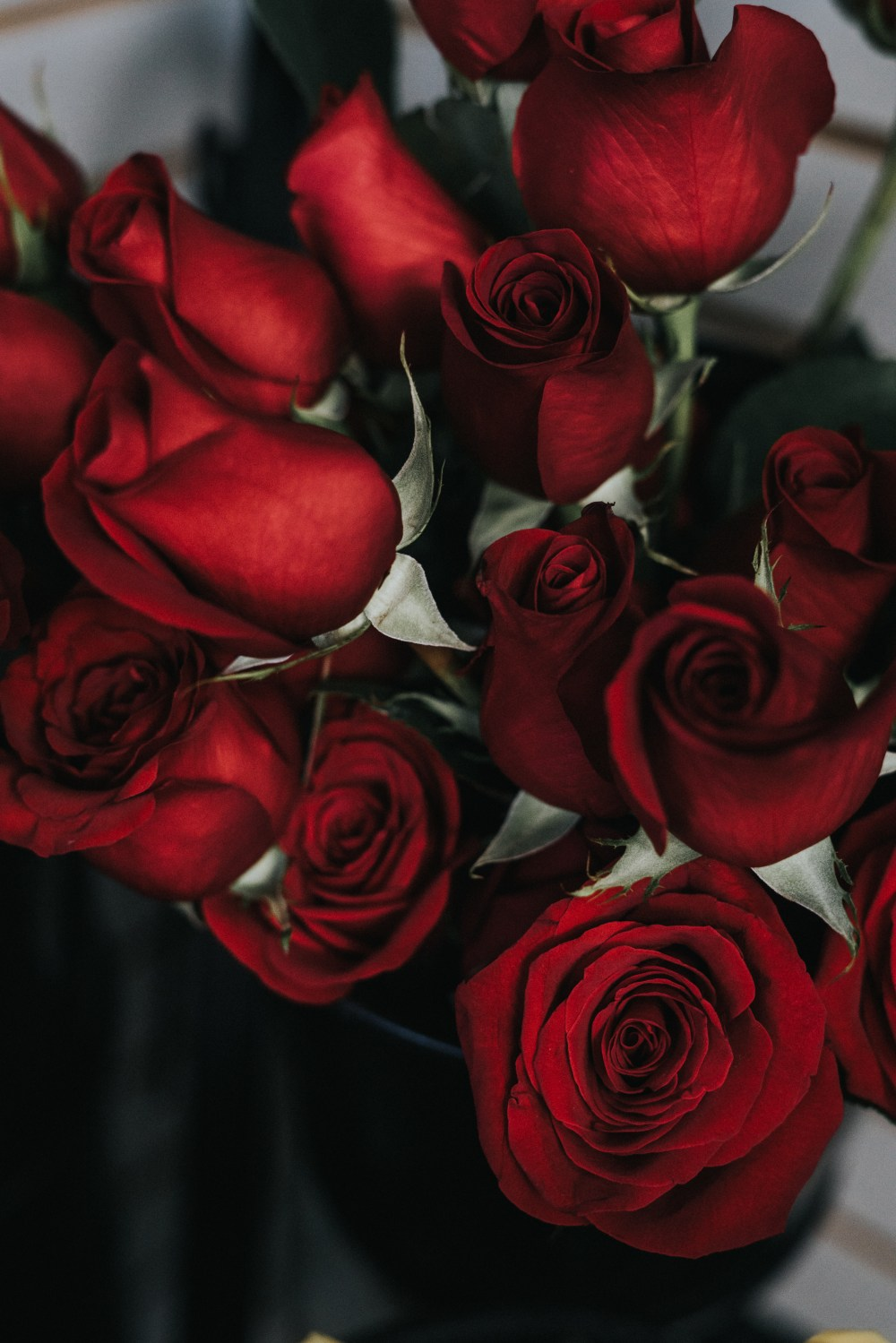 roses hd photo by