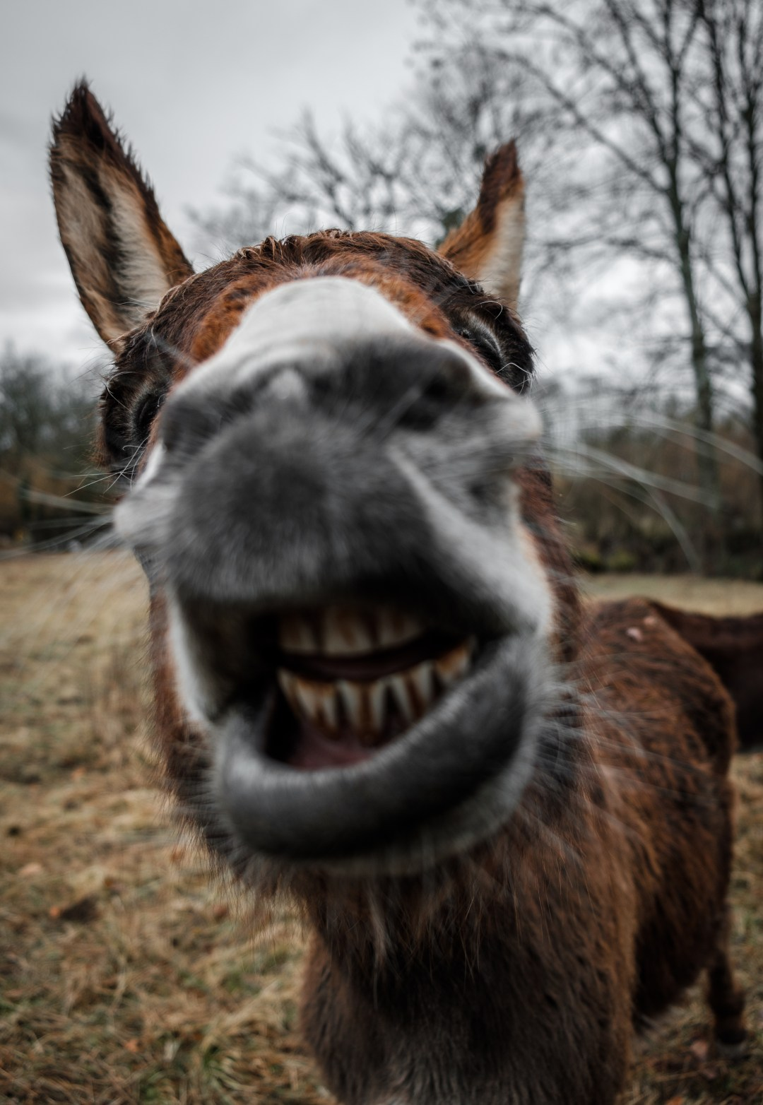 Laughing Girl Wallpapers Free Download 100 Donkey Pictures Download Free Images On Unsplash