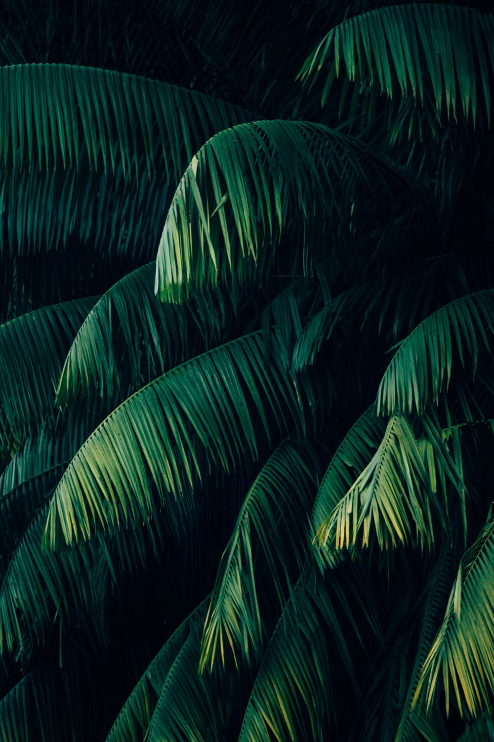 best 100 tropical pictures