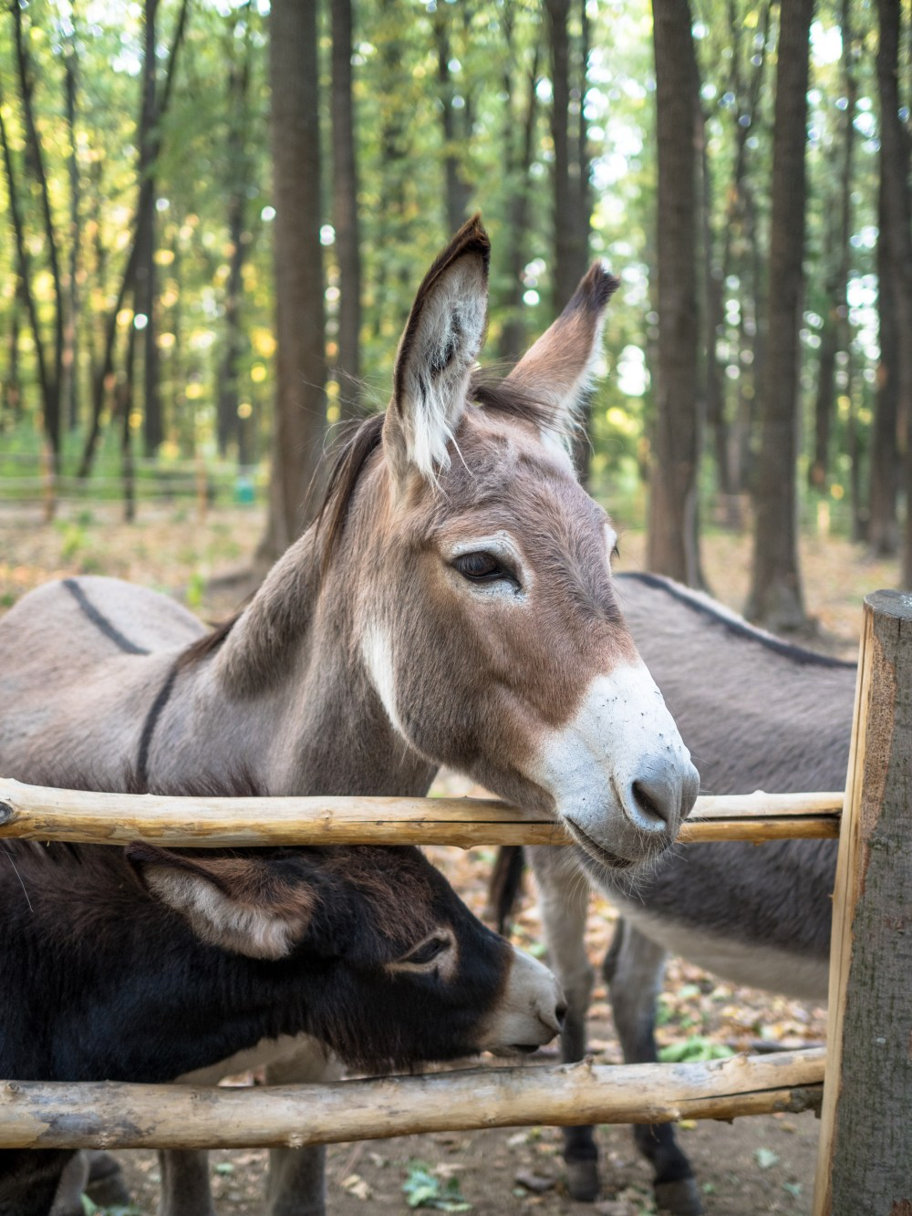 Cute Baby Animals Wallpapers Free Download Donkey Near Brown Wooden Fence During Daytime Photo Free