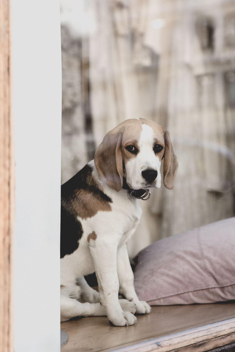 Yum-dogs 25 Free Yum-dog Dog Pet And Animal Unsplash
