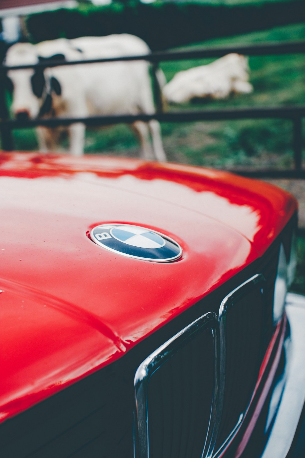 bmw logo pictures download