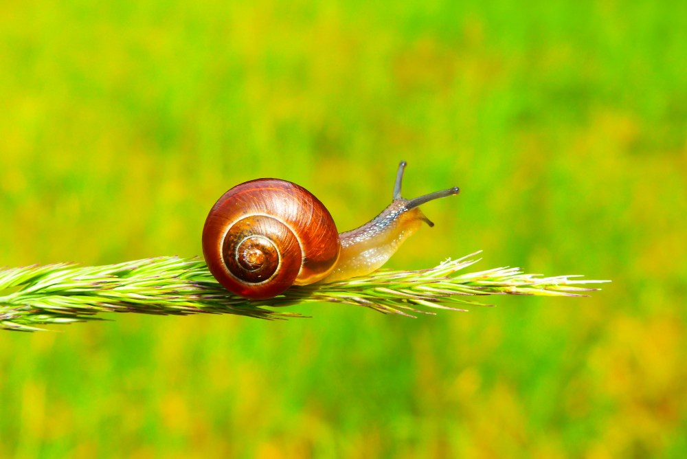 snail pictures hq download