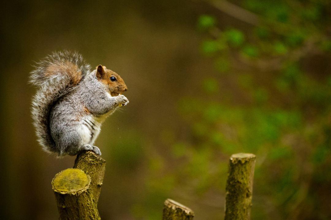 500 squirrel pictures download