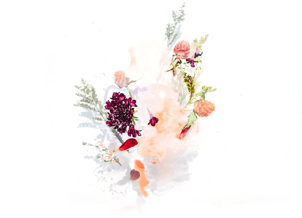 Orange Fall Peonies Wallpaper 100 Watercolor Pictures Download Free Images On Unsplash