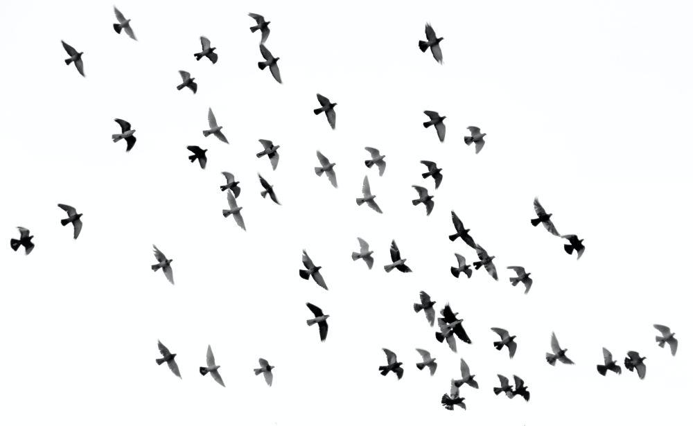 20 free birds pictures