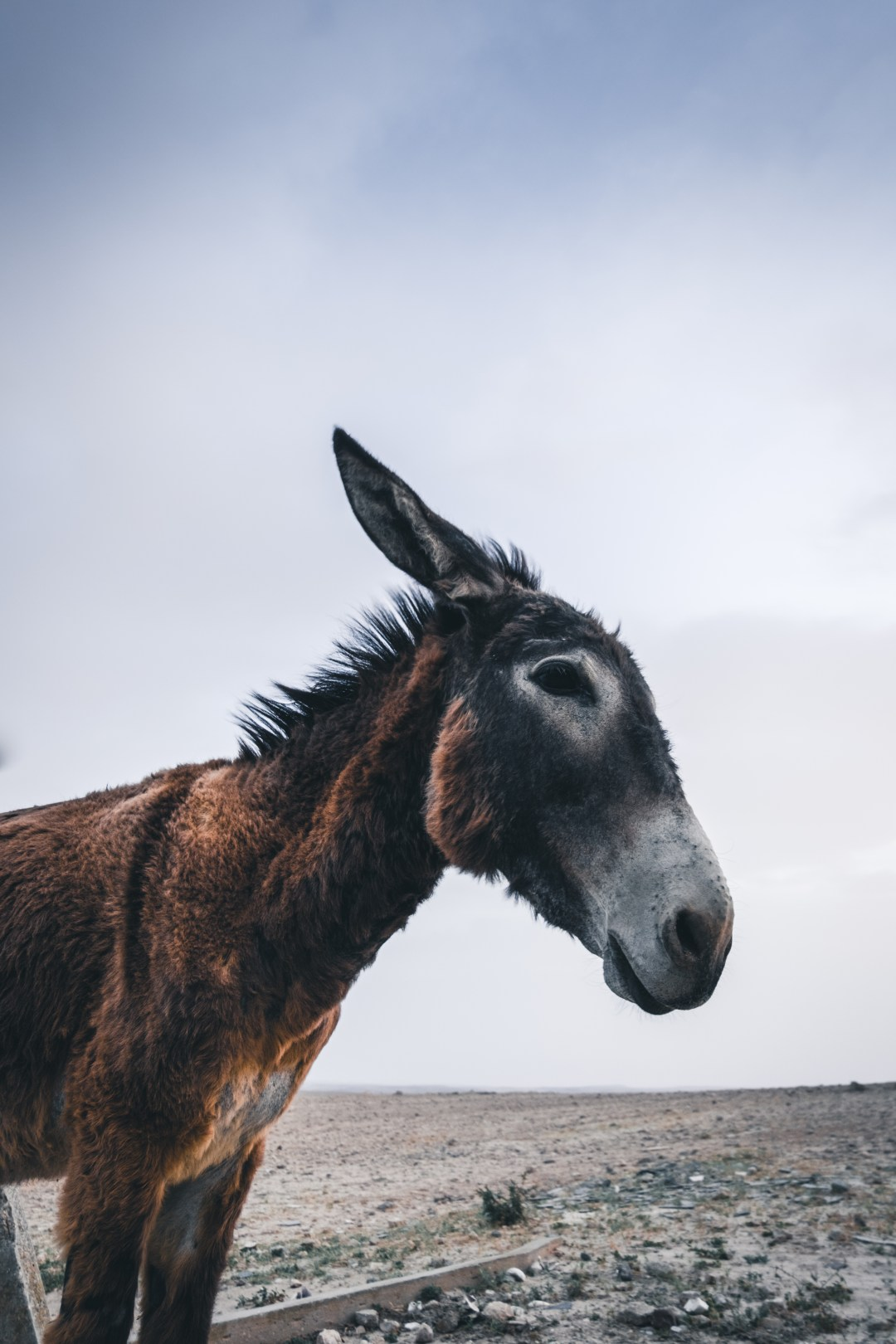 Selective Focus Photography Of Donkey Photo Free Animal