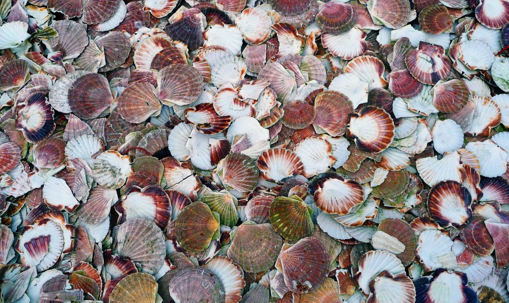 seashell pictures download free