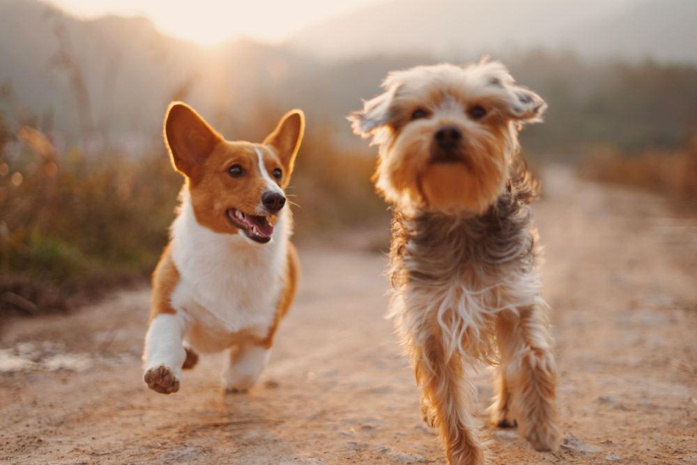 27 pet pictures download