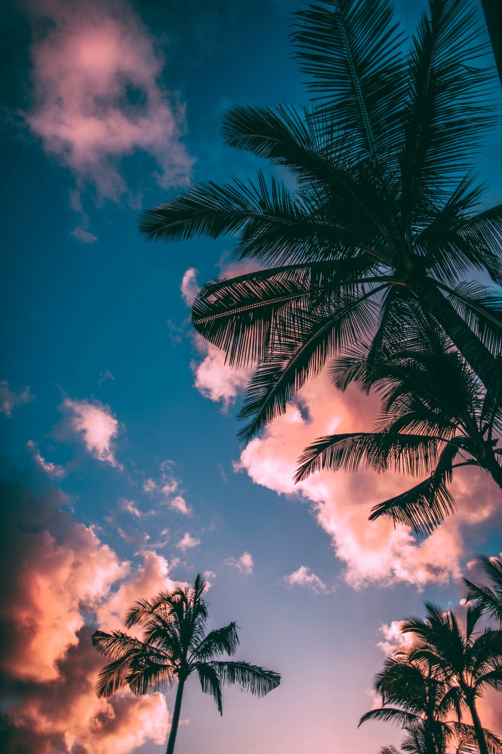 Summer Images Hd : summer, images, Tropical, Pictures, Download, Images, Stock, Photos, Unsplash