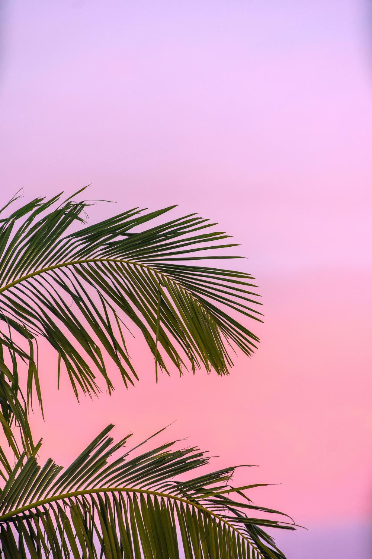 Summer Images Hd : summer, images, Summer, Wallpapers:, Download, [500+, Unsplash