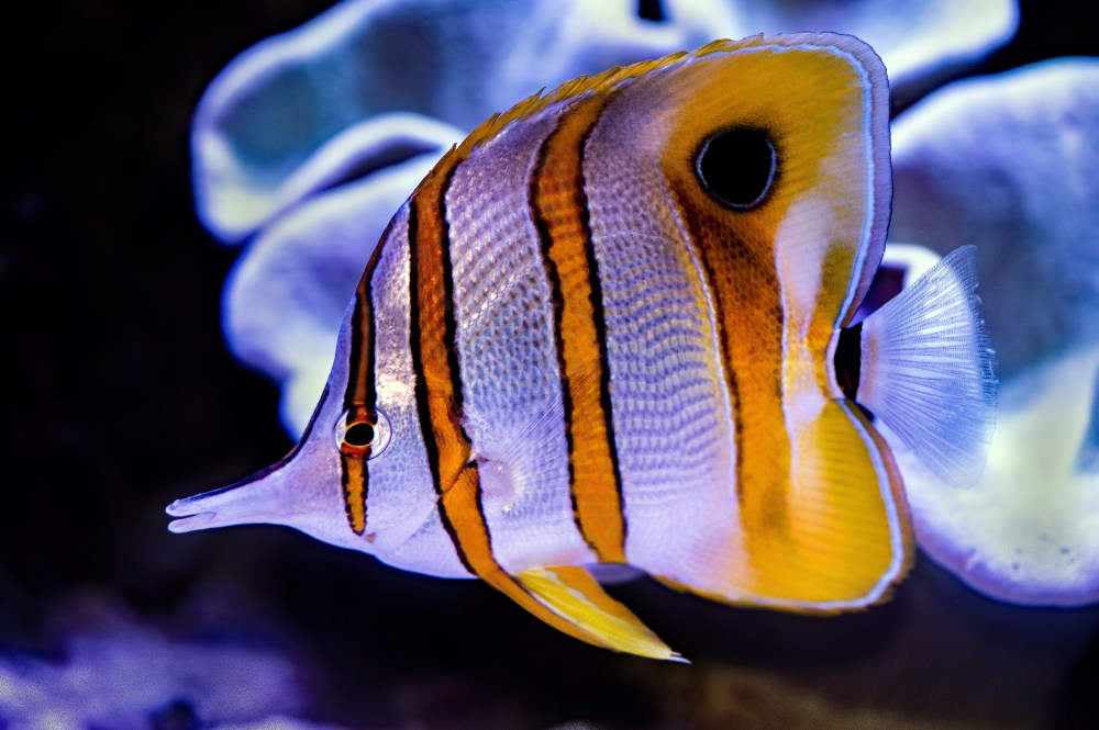 Pretty Fish Pictures   Download Free Images on Unsplash