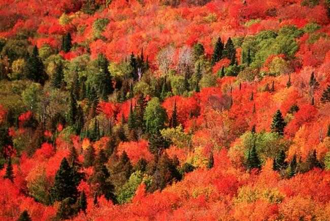 Risultati immagini per animali d'autunno