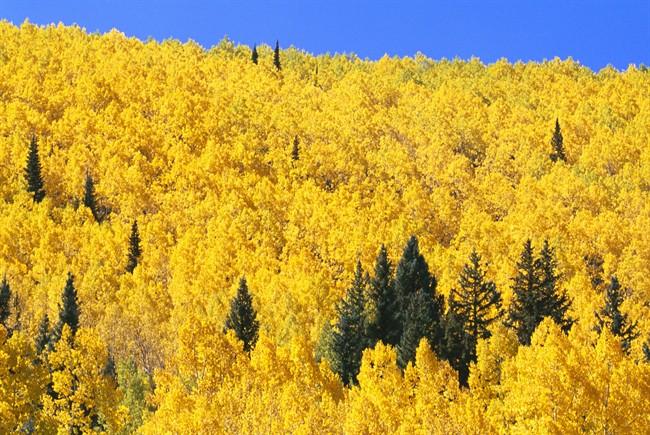 I colori dautunno i posti del foliage
