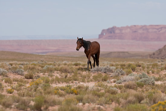 wild horses still roam the landscape