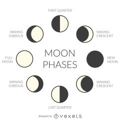 Phases Of The Moon Diagram To Label Ford Focus 2005 Radio Wiring Illustrated Vector Download