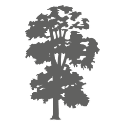 A solitary totara tree, a native tree of new zealand. Tree Silhouette 3 Transparent Png Svg Vector