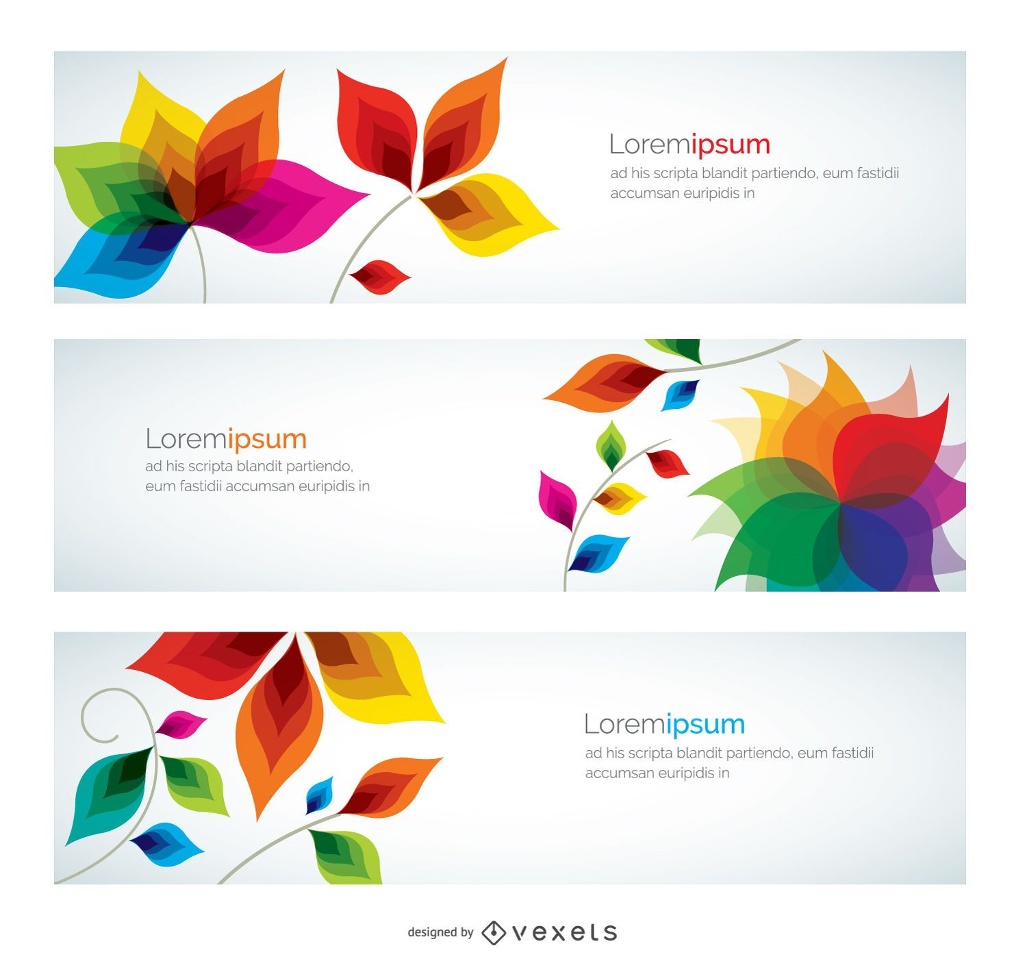 colorful banner flowers vector