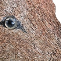 vidaXL.co.uk | Deer Head Wall Mounted Decoration Natural ...