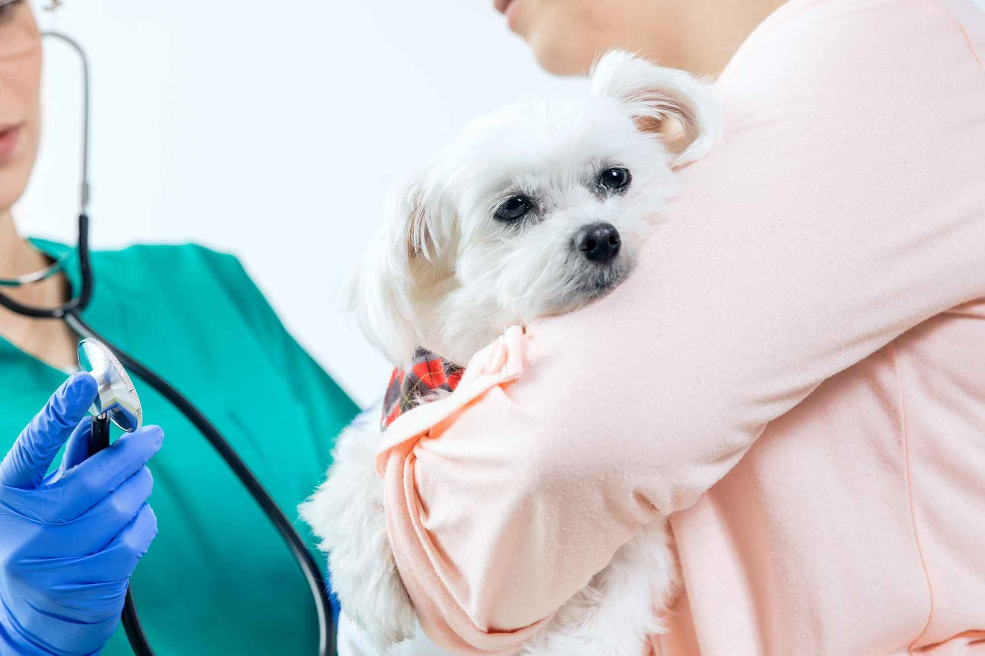 hight resolution of lymph node inflammation lymphadenopathy in dogs