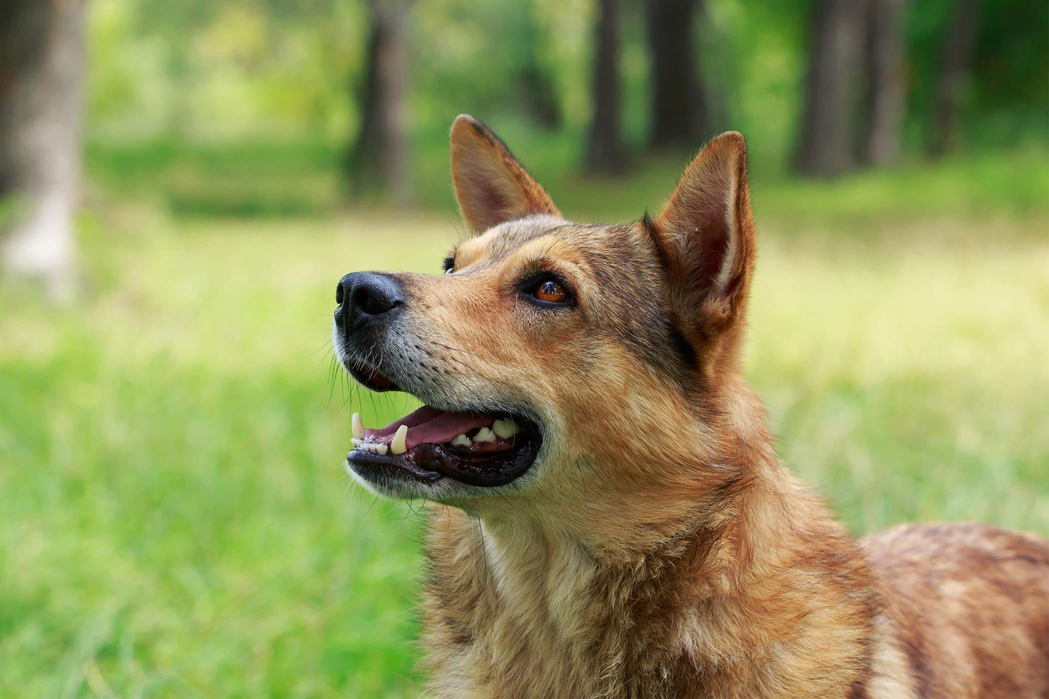 Jaw Chattering in Dogs - Definition Cause Solution ...