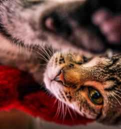 bloating in cats [ 2100 x 1400 Pixel ]