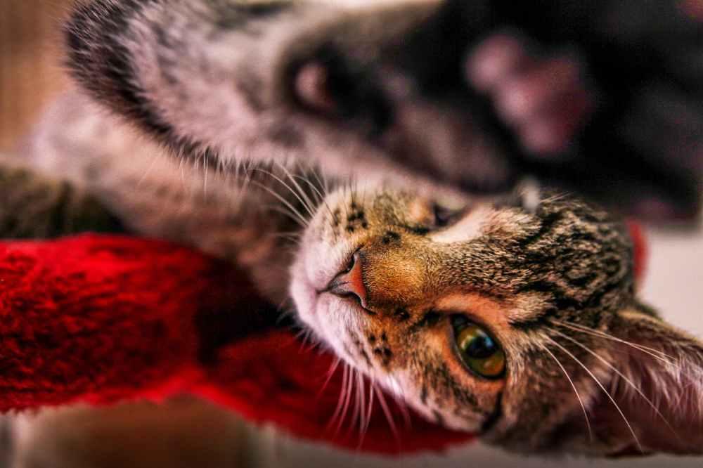 medium resolution of bloating in cats
