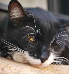 fluid in the abdomen in cats [ 2100 x 1400 Pixel ]
