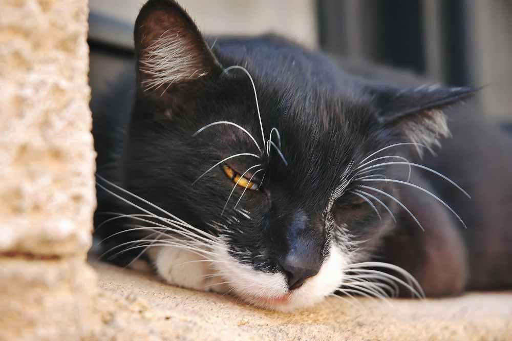 medium resolution of fluid in the abdomen in cats