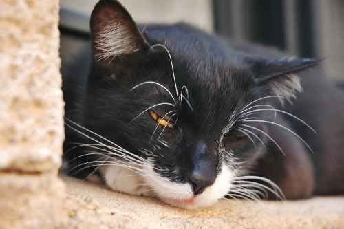 small resolution of fluid in the abdomen in cats