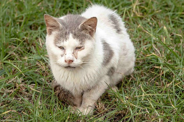 Runny Nose in Cats - Symptoms, Causes, Diagnosis, Treatment ...