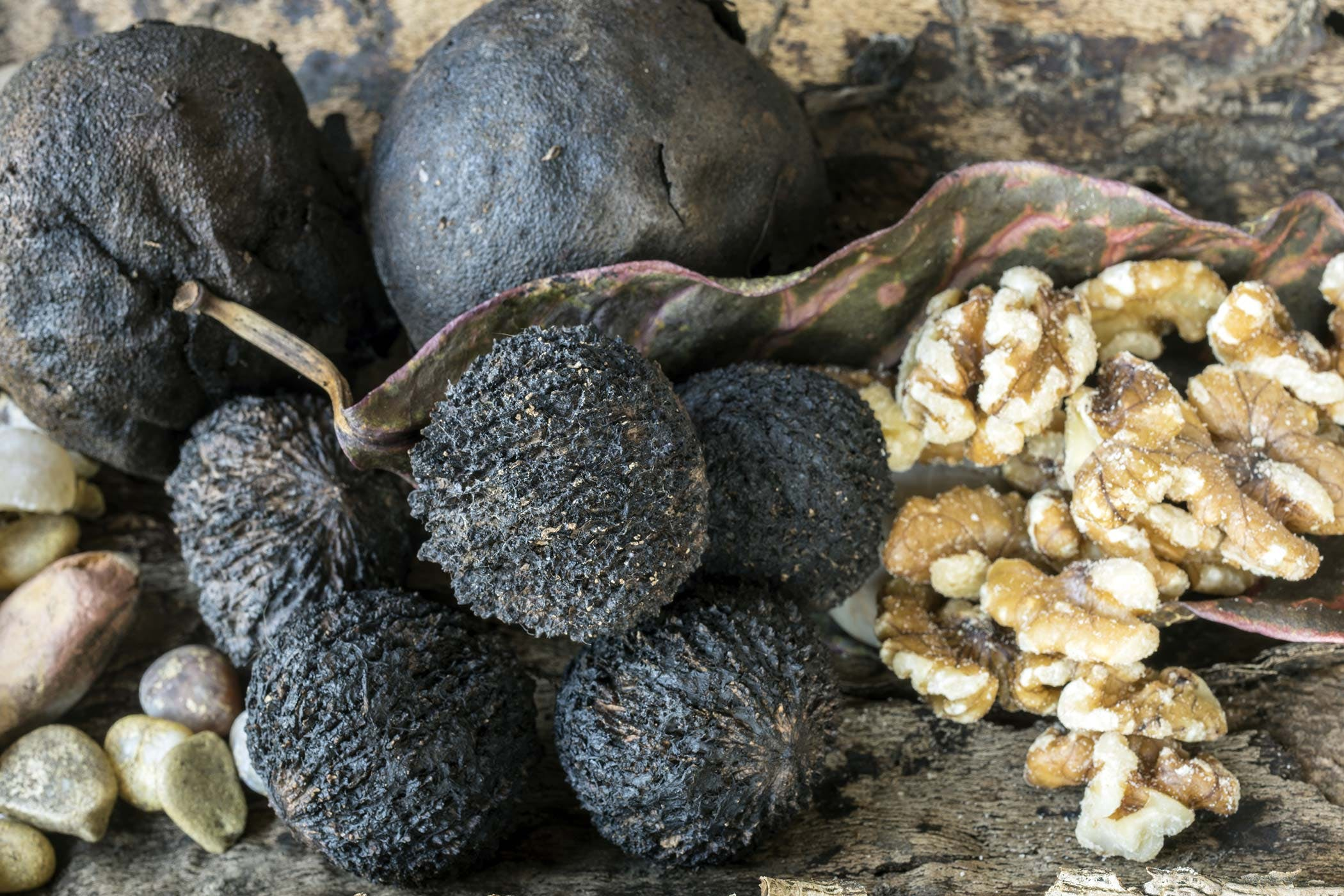 Black Walnut Poisoning in Dogs Symptoms Causes