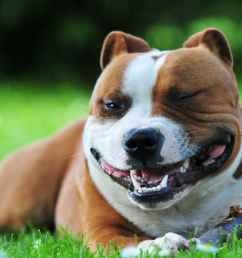craniomandibular osteopathy lion jaw in dogs [ 2100 x 1400 Pixel ]