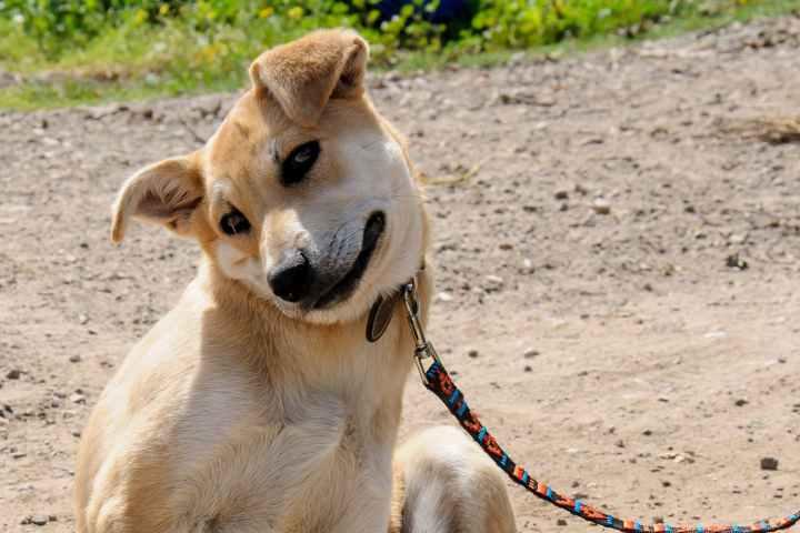 Skin Ulcers In Dogs